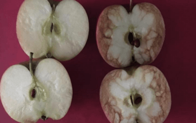 Two Apples - Bullying