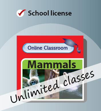 Online Classroom School Licence