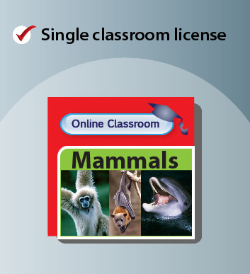 Single Licence Online Classroom