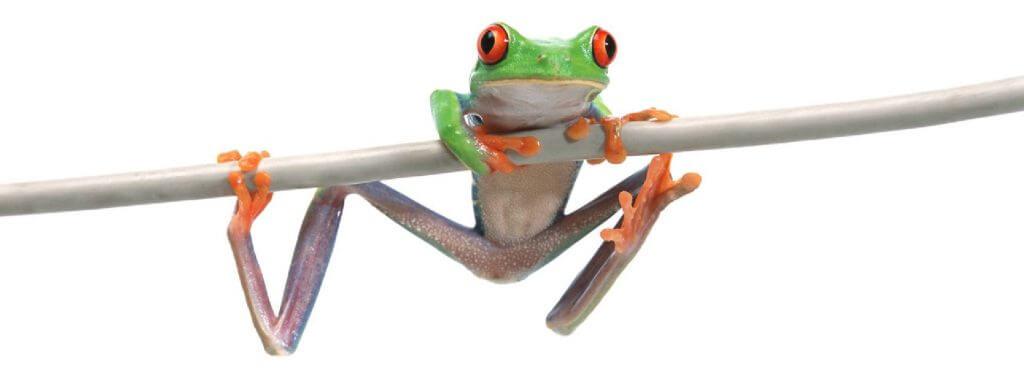 tree-frog-4