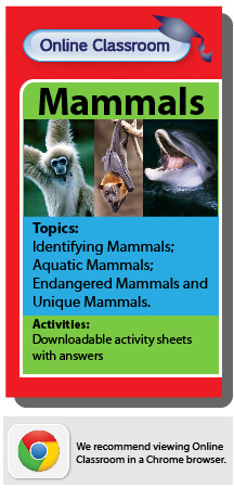 online classroom mammals